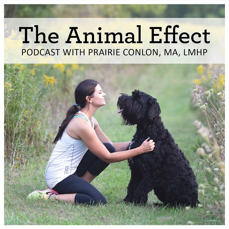 The Animal Effect